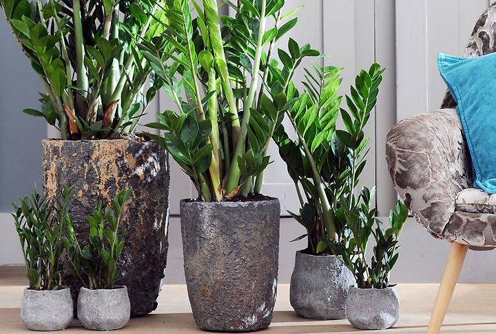5 plantes d 39 int rieur pour votre maison ou appartement for Meilleur plante interieur